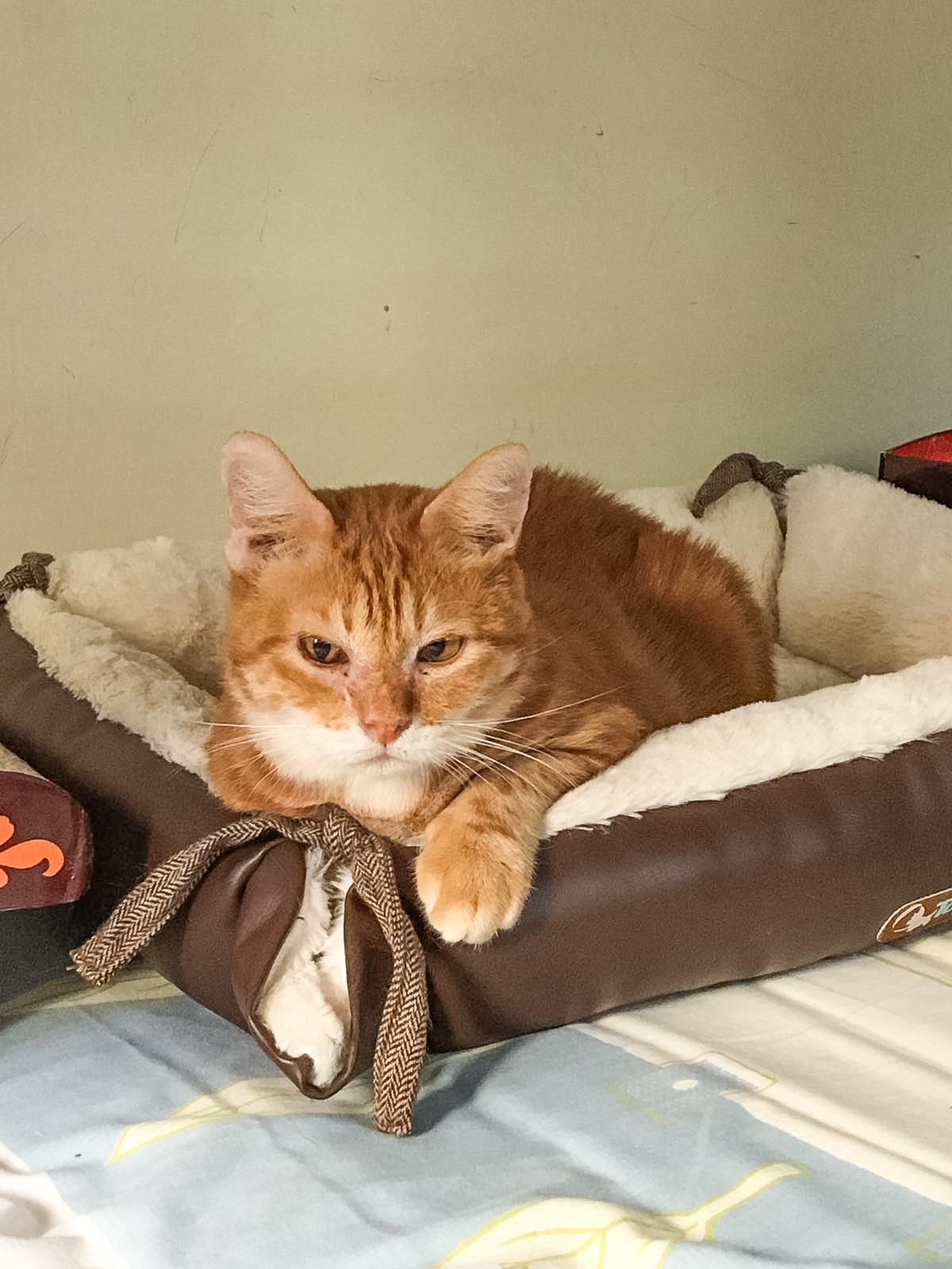 Why does not a cat like to sit on their hands, does the cat dislike being ironed