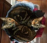 Betty-Lou & Jasmine