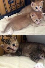 Doris's Kittens