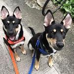 Nash & Petra